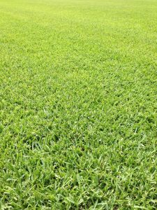 Floratam St Augustine Grass Sod - Houston Grass South