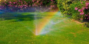 Watering Your Lawn the Smart Way
